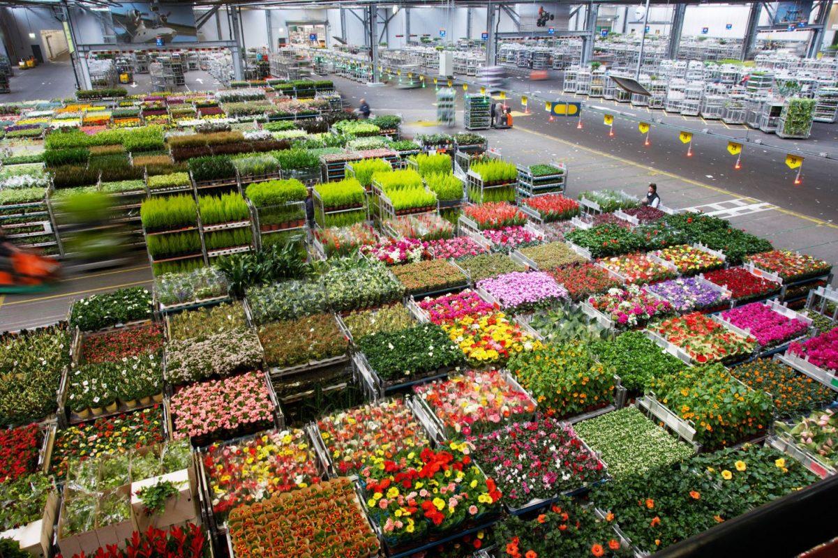صادرات محصولات کشاورزی از هلند