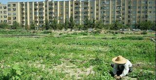 تغییر کاربری اراضی کشاورزی